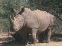 rhino021314