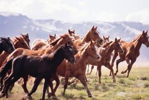 wildhorsesfirstforhunters051214