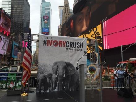 ivory-crush-2
